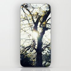 Golden Moss iPhone & iPod Skin
