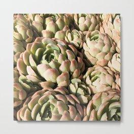 Mexico - Succulents Pink Metal Print