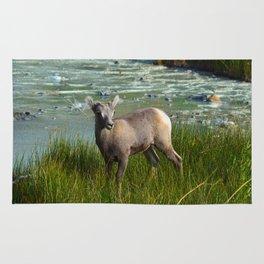 Baby big horn sheep in Jasper National Park Rug