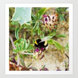 bumble bee on the dunes I Art Print