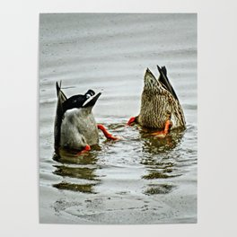 Duck Bums Poster