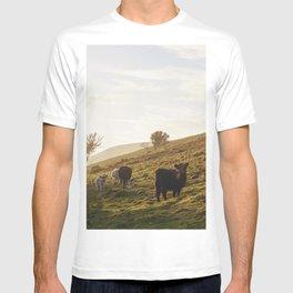 Cattle grazing on mountainside. Derbyshire, UK. T-shirt