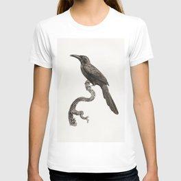 Jacamar from Histoire Naturelle des Oiseaux de Paradis et Des Rolliers (1806) by Jacques Barraband ( T-shirt