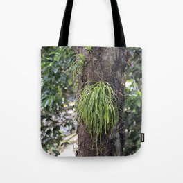 Epiphyte growth on tree in rainforest Tote Bag