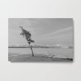 Swept Sapling Metal Print