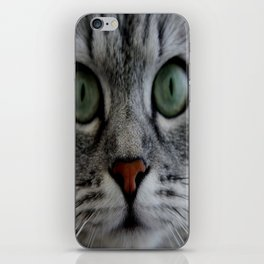 cat face eyes gray fluffy cute animals iPhone Skin