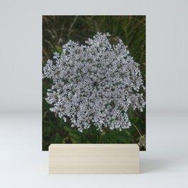 Queen Anne's Lace Original Mini Art Print