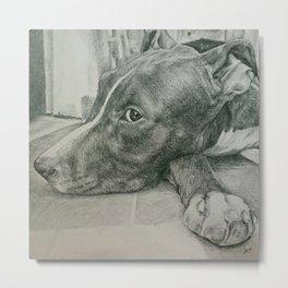 Dog's look Metal Print