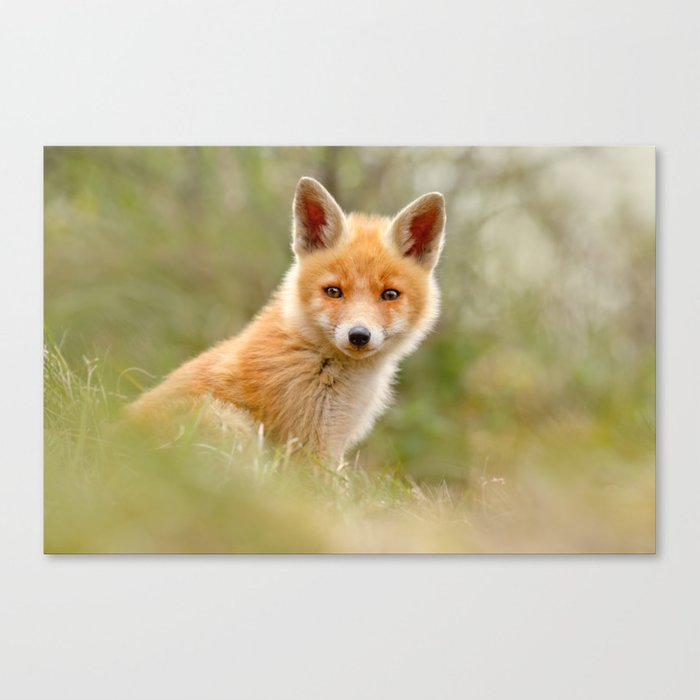 The Face of Innocence .:. Red Fox Kit Canvas Print