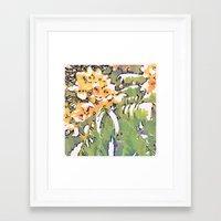 cassia beck Framed Art Prints featuring Cassia Leptophylla by Maleeka Marsden