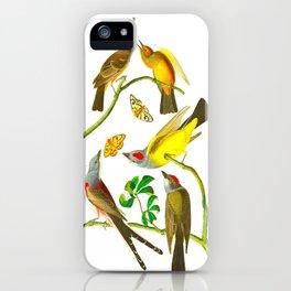 Vintage Scientific Bird Butterfly & Floral Illustration iPhone Case