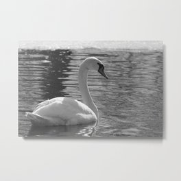Black and White Swan Metal Print
