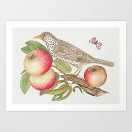 The 18th century  of a brown bird on apple branch with caterpillar Art Print
