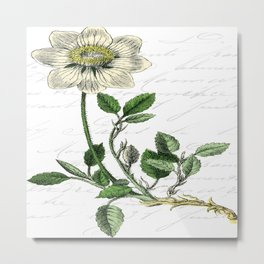 Botanical Flower Metal Print