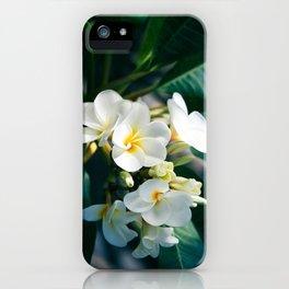 Pua Melia Na Puakea Onaona Tropical Plumeria Maui Hawaii iPhone Case