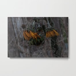 Lost In The Cycle; death/renew series - The Sunflower. Metal Print
