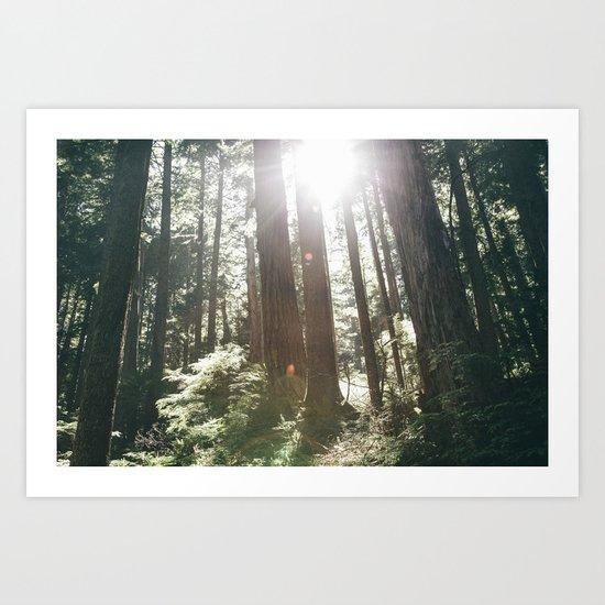Sunny Forest Art Print
