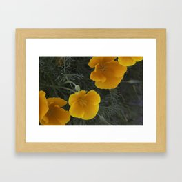 Orange California poppies Framed Art Print
