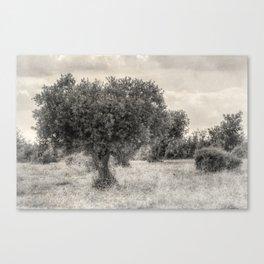 Mediterranean landscape Canvas Print