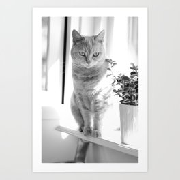 Esmeralda - On The Windowsill Art Print