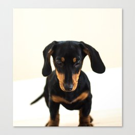 Weenie dog (color) Canvas Print