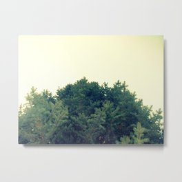Under The Fir Tree Metal Print