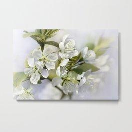 Spring white 044 Metal Print