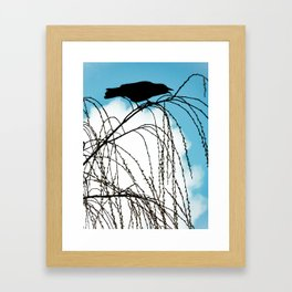 Cawing Crow Framed Art Print