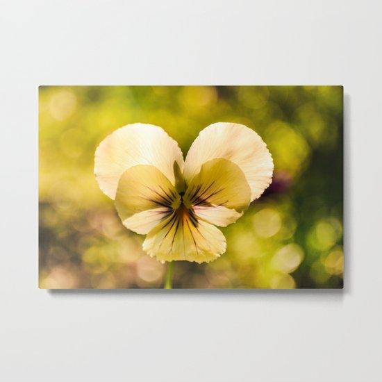 Viola flower Metal Print
