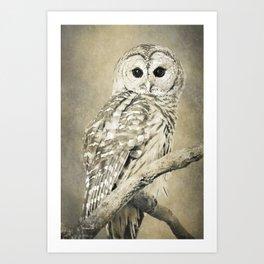 Sepia Owl Art Print