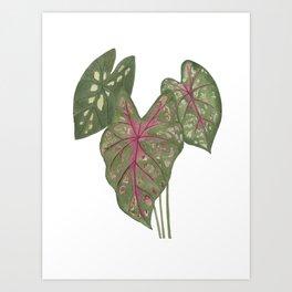 Leaves of Caladium Art Print