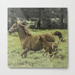 Mama And Baby Horse In The Field  Metal Print