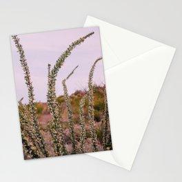 Ocotillo at Sunrise Stationery Cards