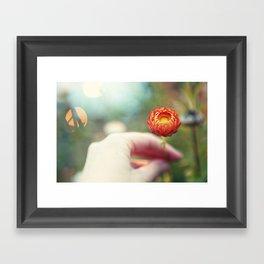 Everlasting Strawflower Framed Art Print