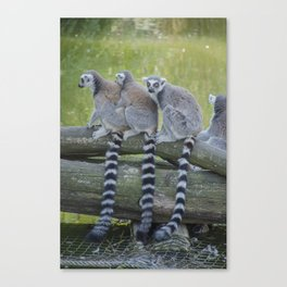 Oposumm Canvas Print