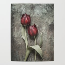 Red Tulips II Poster
