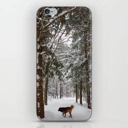 Dog exploring a snowy forest iPhone Skin
