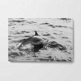 Dolphin in Black & White Metal Print