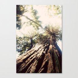 Too Tall Tree Canvas Print