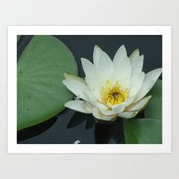rileigh smirl Art Prints featuring Water Lilly by Rileigh Smirl
