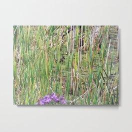 Mallard Duck in natural environment Metal Print