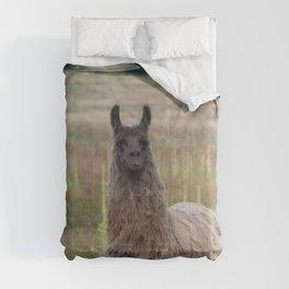 Llama Portrait - 2 Comforters