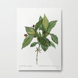 Alpine honeysuckle (Lonicera alpigena) from Traité des Arbres et Arbustes que l'on cultive en France Metal Print