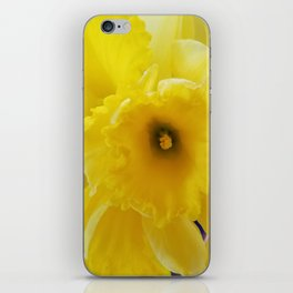 Yellow Daffodil iPhone Skin