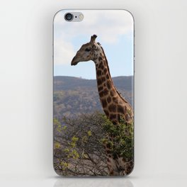 Giraffe - South Africa iPhone Skin