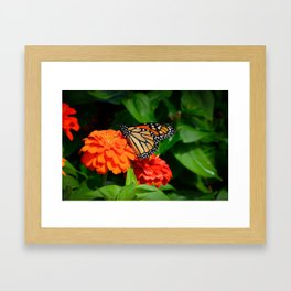Monarch and the Mum by Teresa Thompson Framed Art Print
