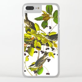 Blackpoll Warbler Bird Clear iPhone Case