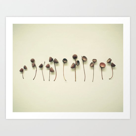 Acorn Collection Art Print