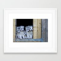 puppies Framed Art Prints featuring Husky puppies by Nathalie Photos