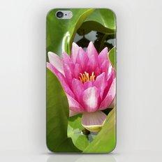 water lily XI iPhone & iPod Skin